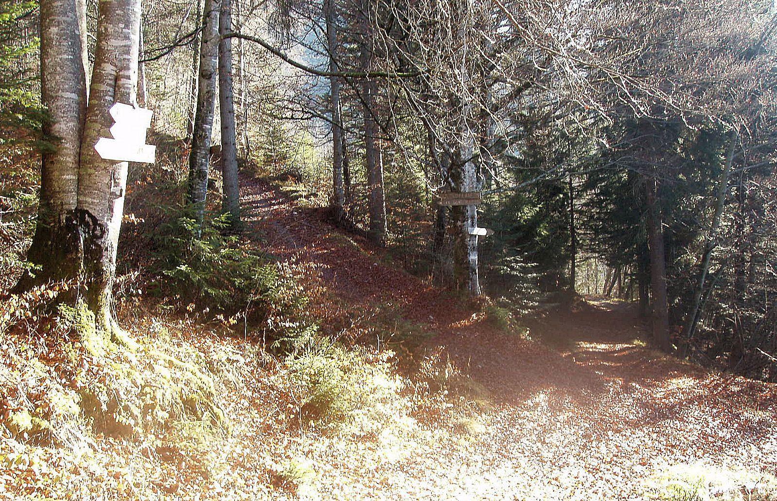Point coté 1120m. A gauche, direction les dents de Lanfon. Le retour se fait par le sentier de droite.