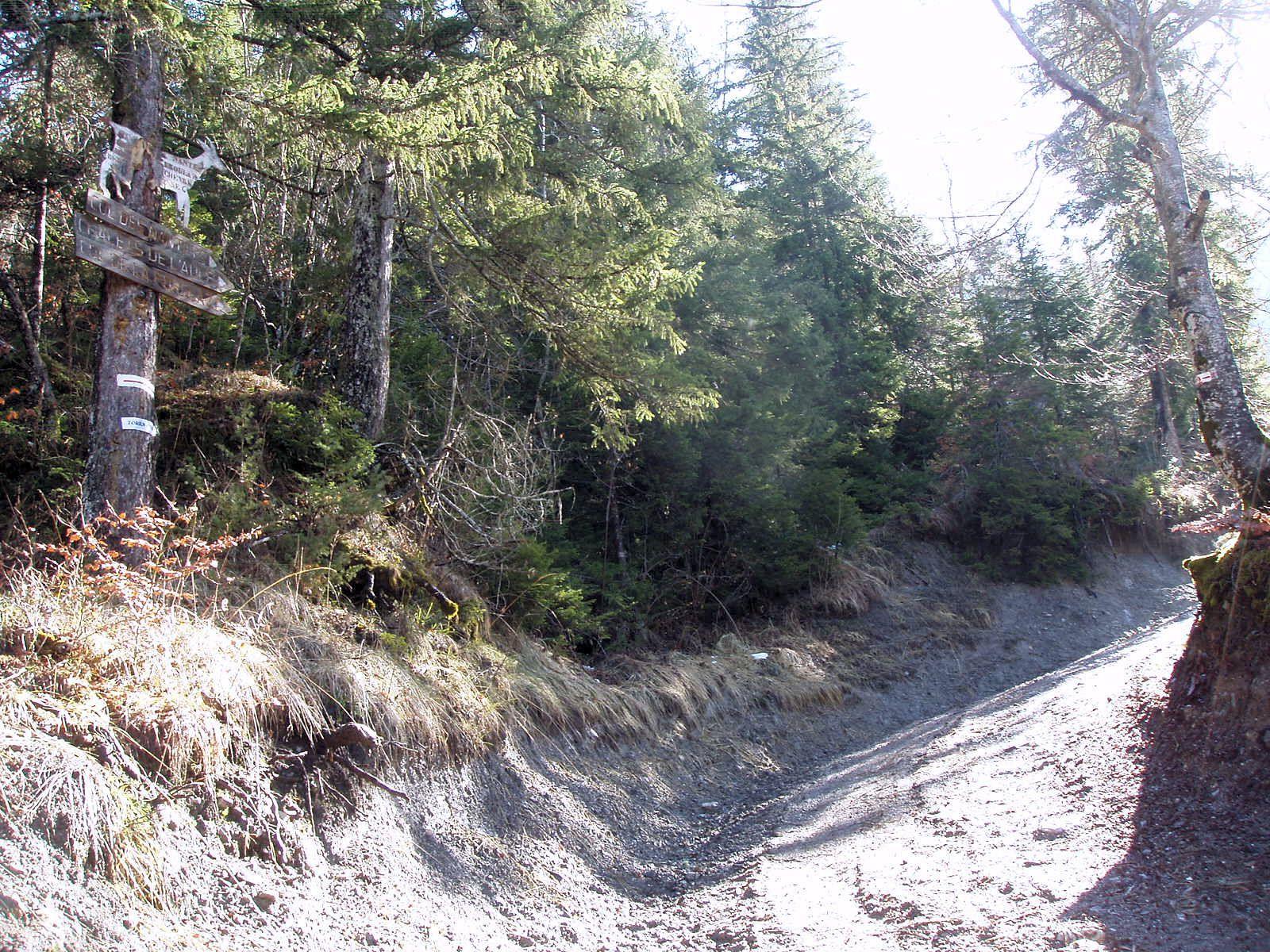 Laarge sentier jusqu'au col des Nantets - Il est marqué par des flèches vert fluo et rouge. Parfois, les panneaux indicateurs sont...dans les arbres (A gauche sur cette photo)