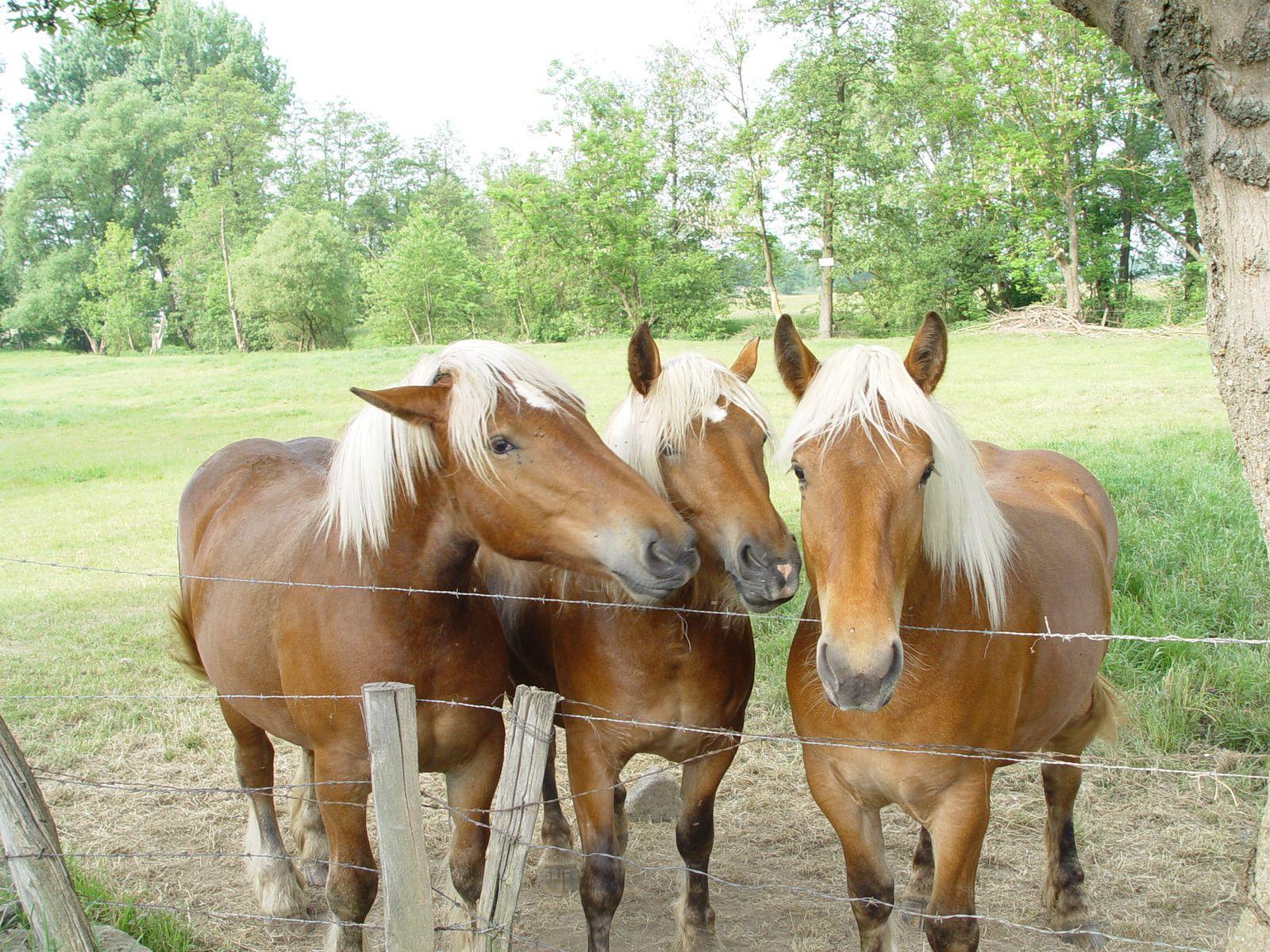 Le cheval, le meilleur ami de l'homme ?