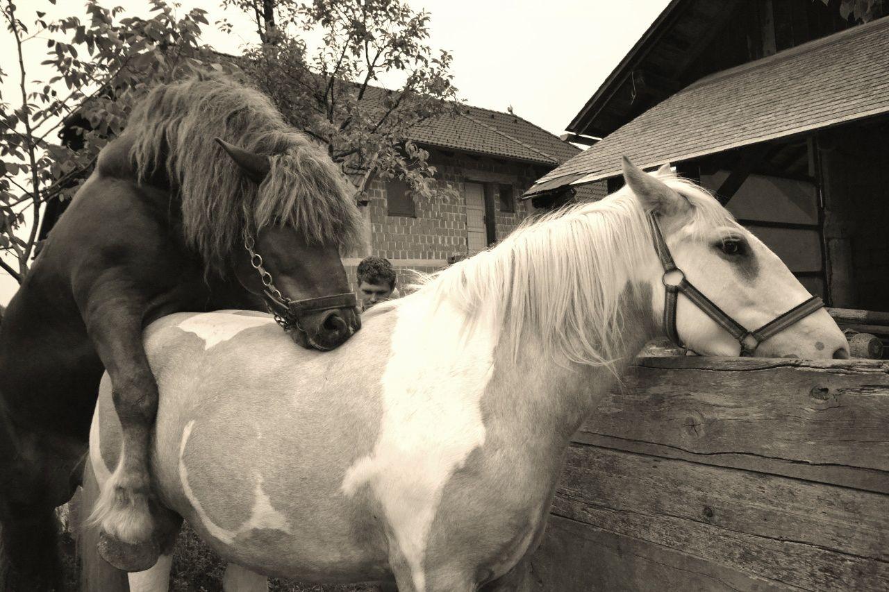 Site de rencontre pour les amoureux des chevaux