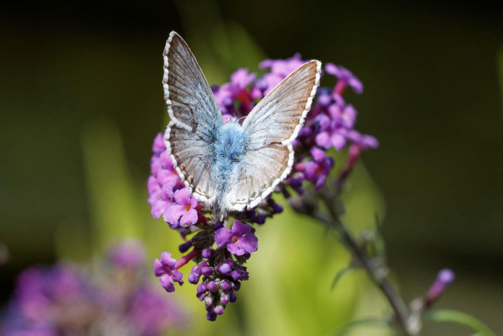 78 - Des insectes dans nos jardins (21) : Août 2013