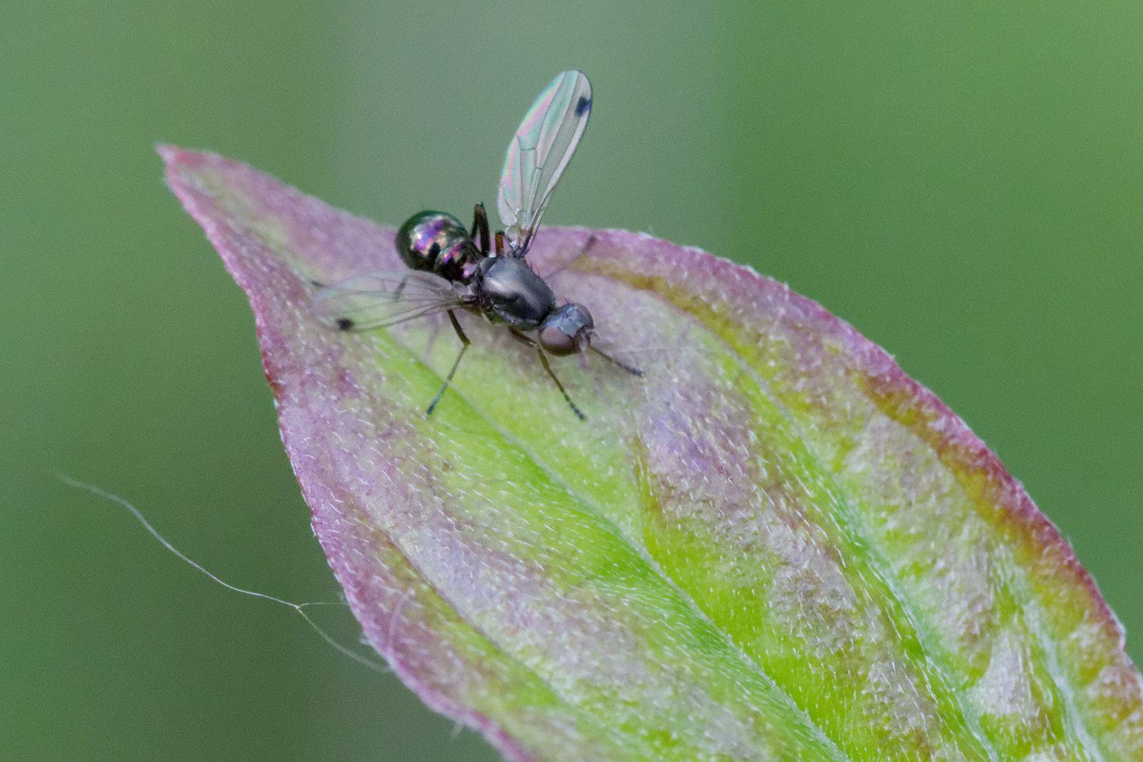 118 - Entre nid d'araignée et grèbons huppés : 03/05/2014
