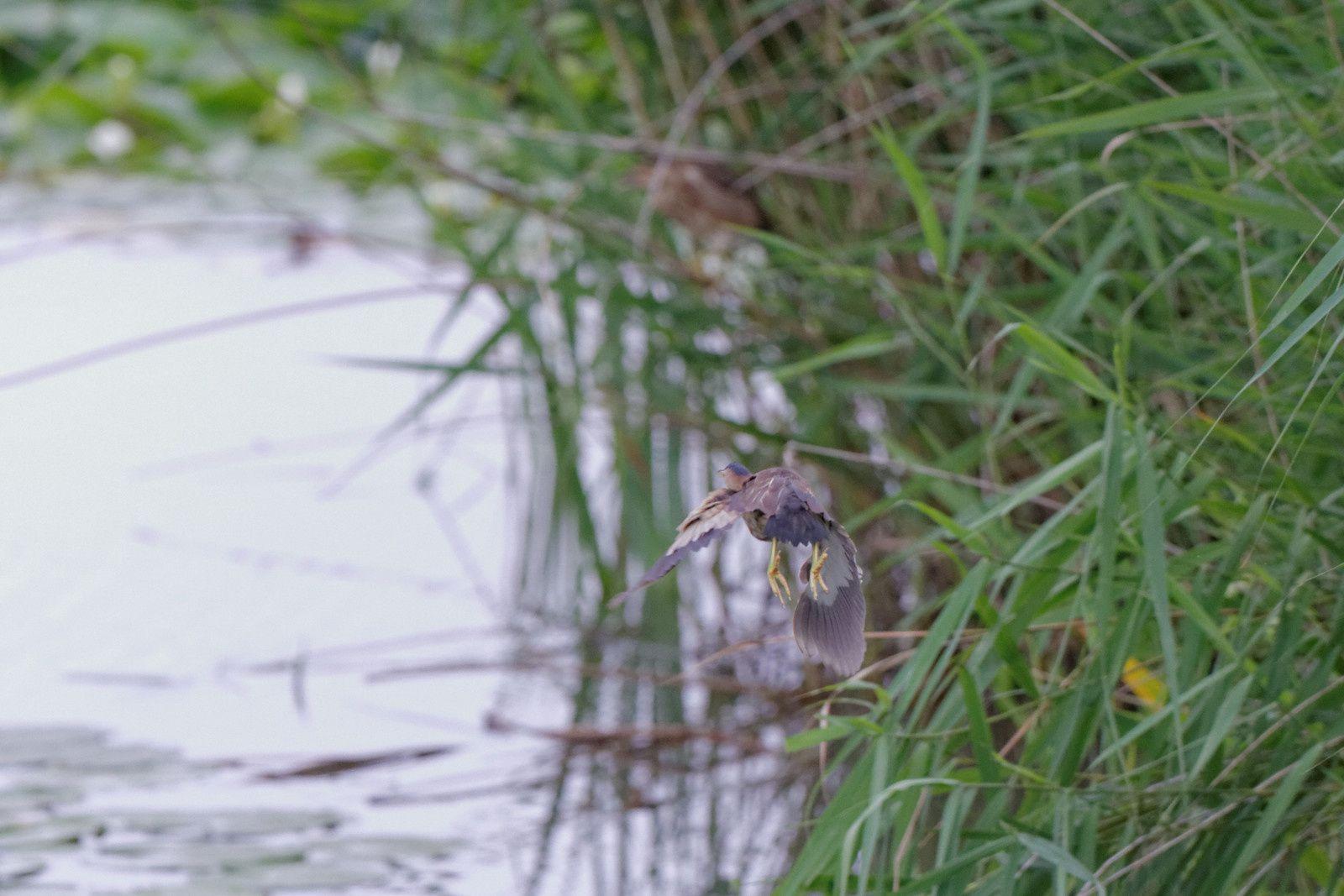 136 - L'avifaune au Sausset, 2ème ! : 14/07/2014