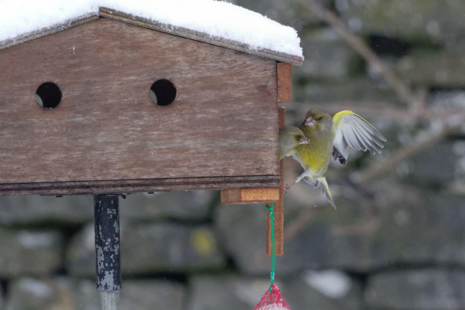 141 : Les visiteurs de jardin en hiver : 03/12/2012