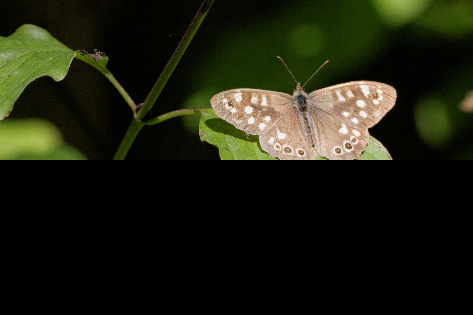 146 - Du soleil et des espèces à voir : 13/09/2014
