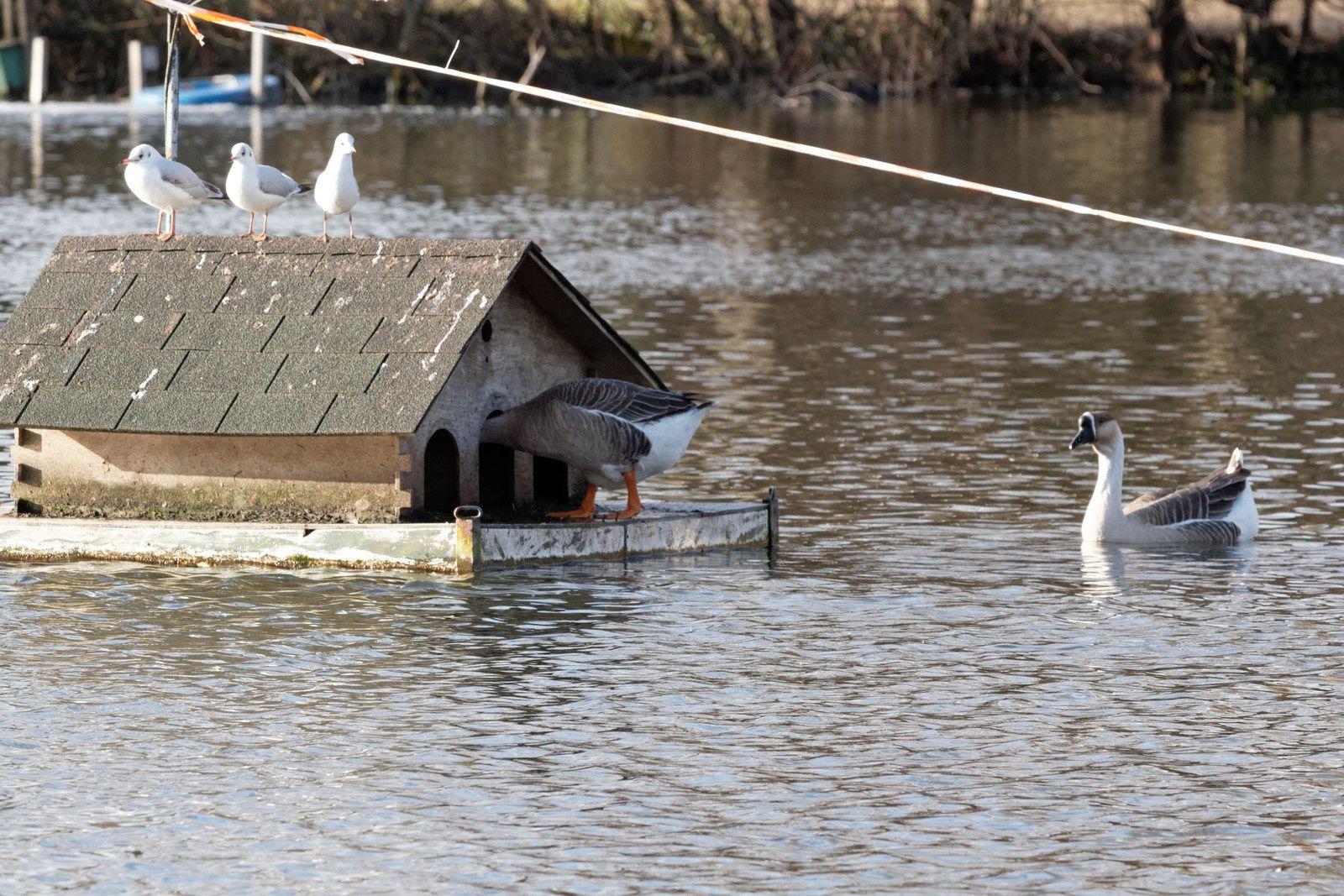 161 - Photos souvenirs, opération Wetlands : 17/01/2015