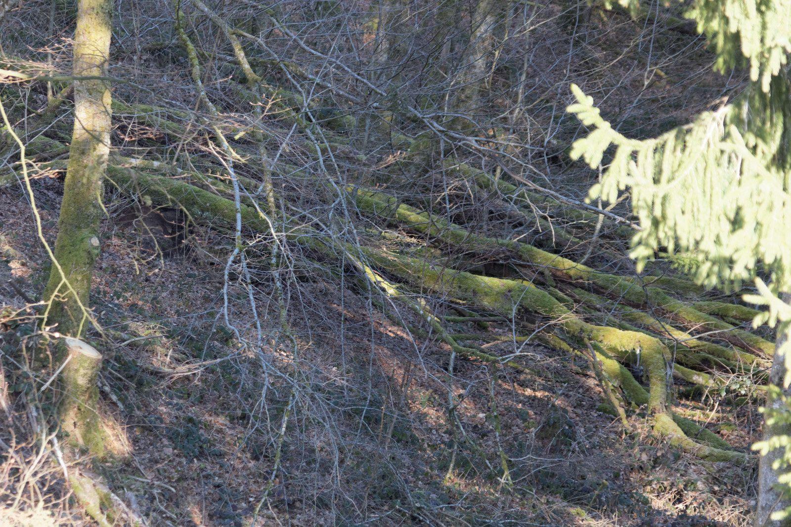 171 - Chaumeçon en pleine forêt : 5&6 avril 2015