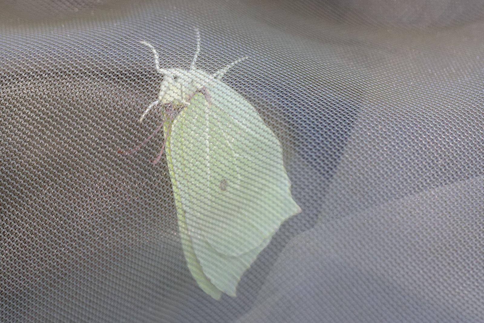 188 - Sortie Papillons au Grand-Voyeux : 27/06/2015