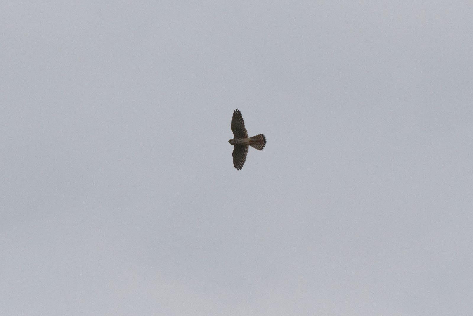204 - Une sortie pour l'avifaune même sous la pluie : 12/09/2015