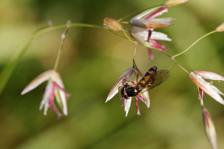 248 - Il faut voir ces insectes de très, très près ! : 18/06/2016