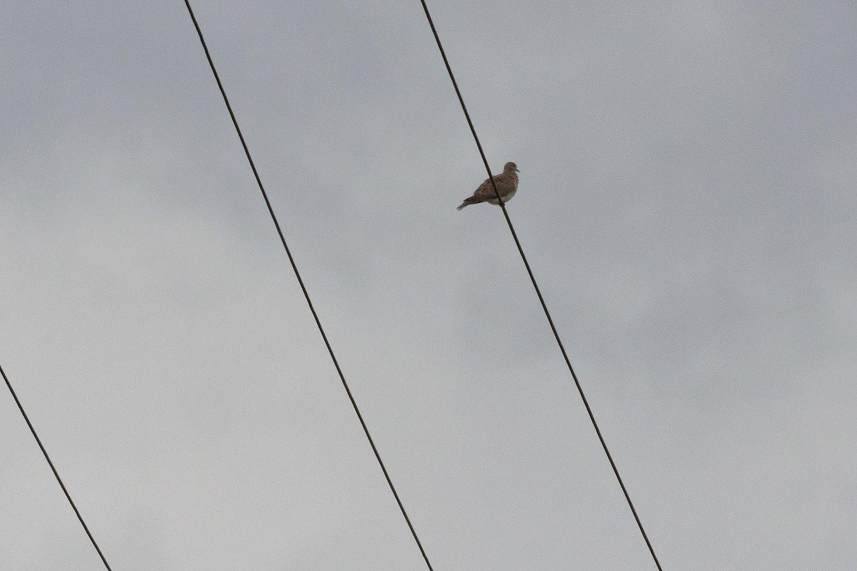251 - Un coin pour les ornithologues ! : 03/07/2016