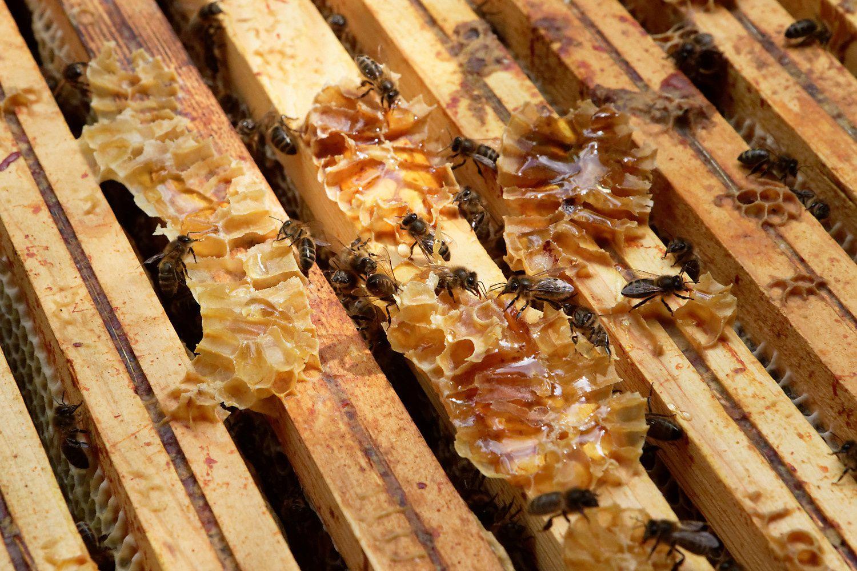 254 - Préparons la collecte du miel ! : 15/07/2016