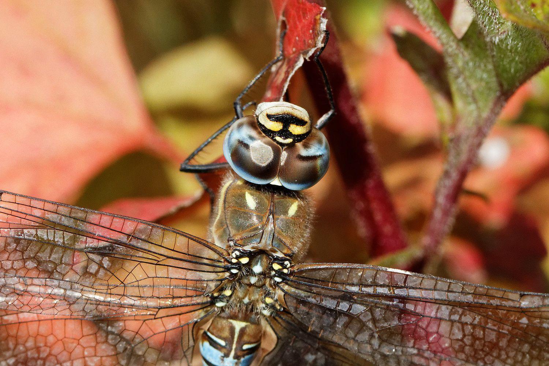 267 - Per Coleoptera Per Diptera... : 15/10/2016