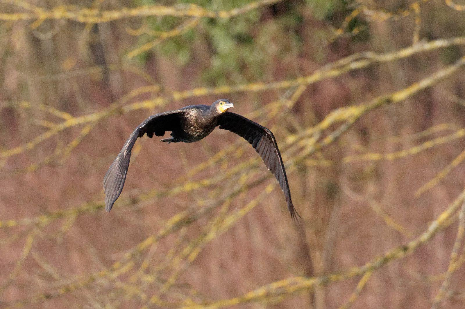 288 - Les premiers nids sont annoncés ! : 25/02/2017