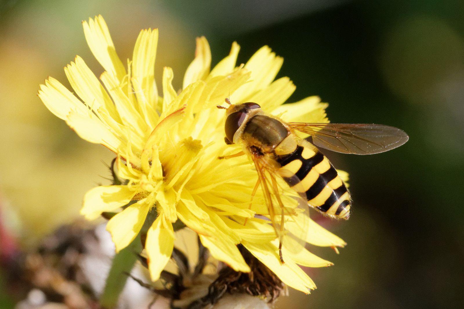 321 - Prenons un bon bain de nectar dans les Fleurs ! : 02/09/2017