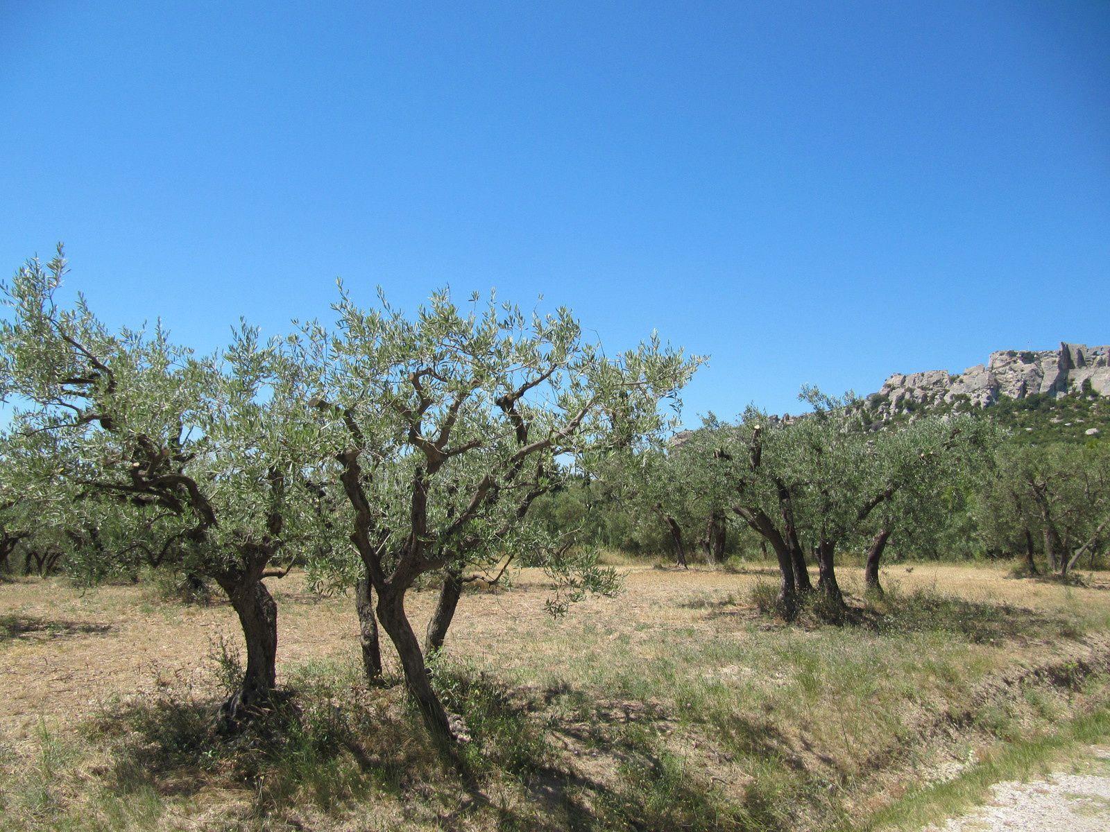 15 jours en Ardèche et ses environs