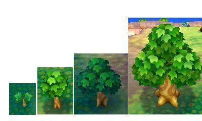 Photo 1 (évolution d'un arbre classique), photo 2 (l'arbre pendant le mois d'avril).