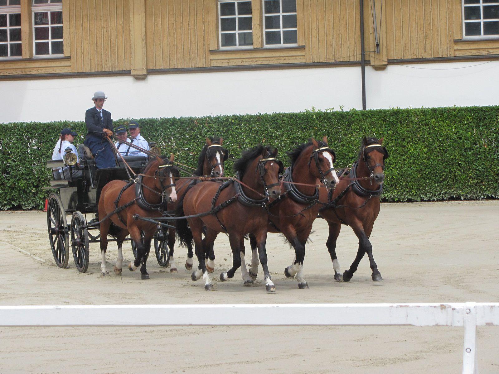 en août, on va à Avenches pour voir les chevaux