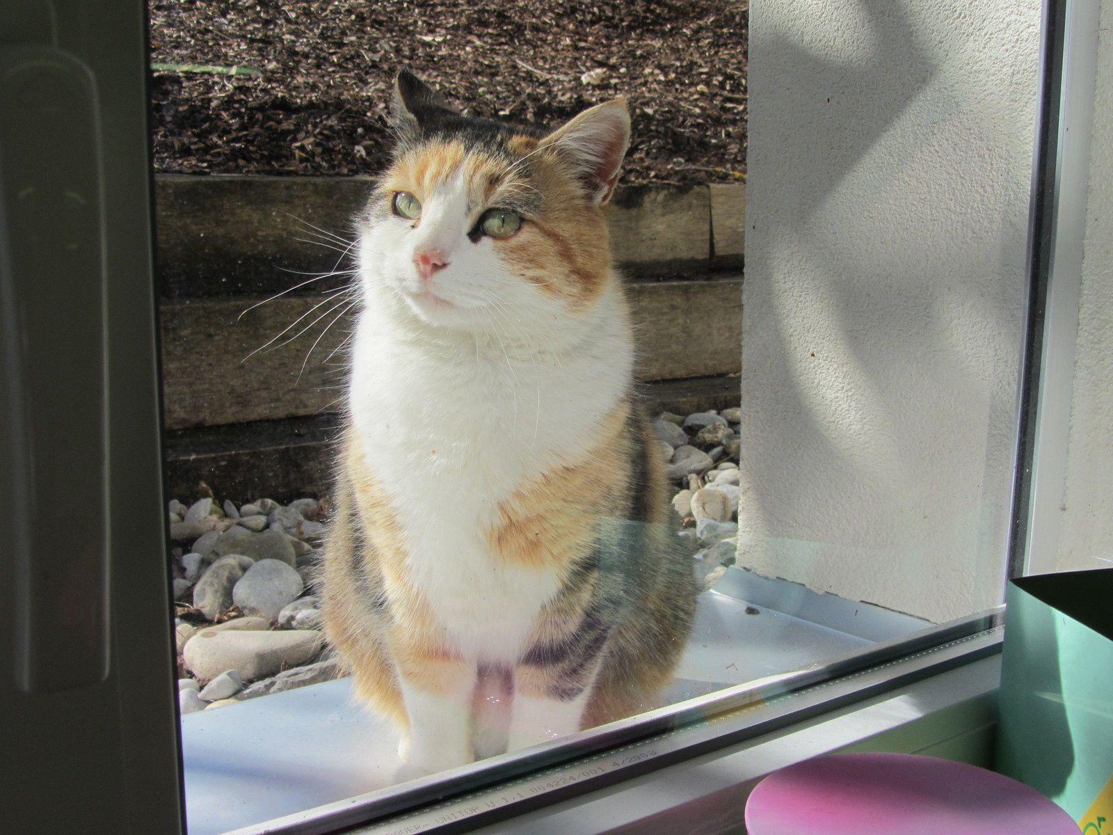 Zoé à la fenêtre de Méli Mélo....