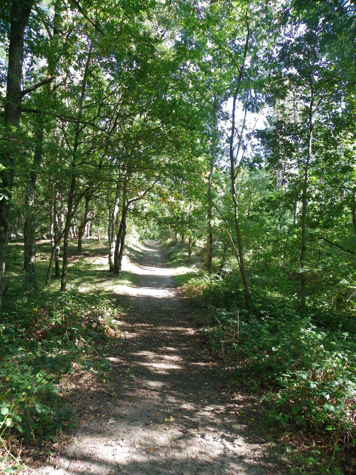 Ce chemin forestier disparaîtrait au profit d'une autoroute pour poids lourds avec la révision du PLU