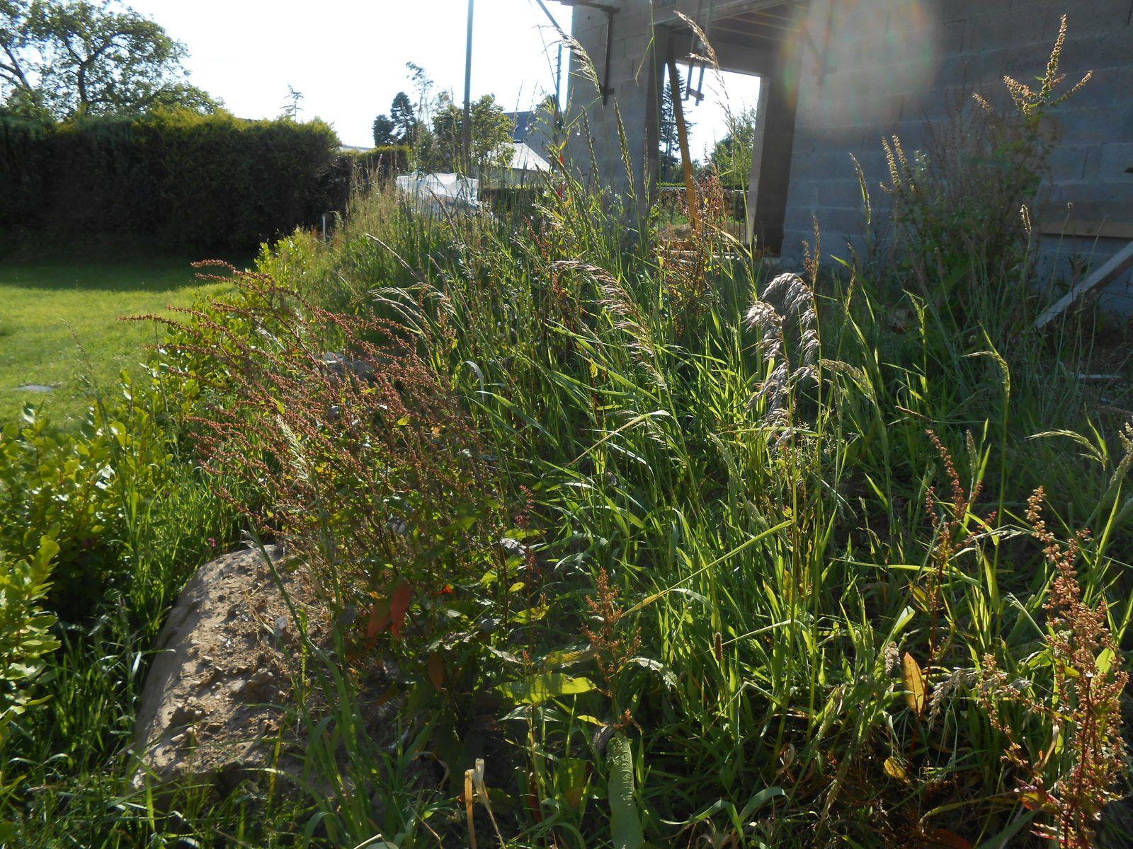 C bientôt la savane mon Jardin
