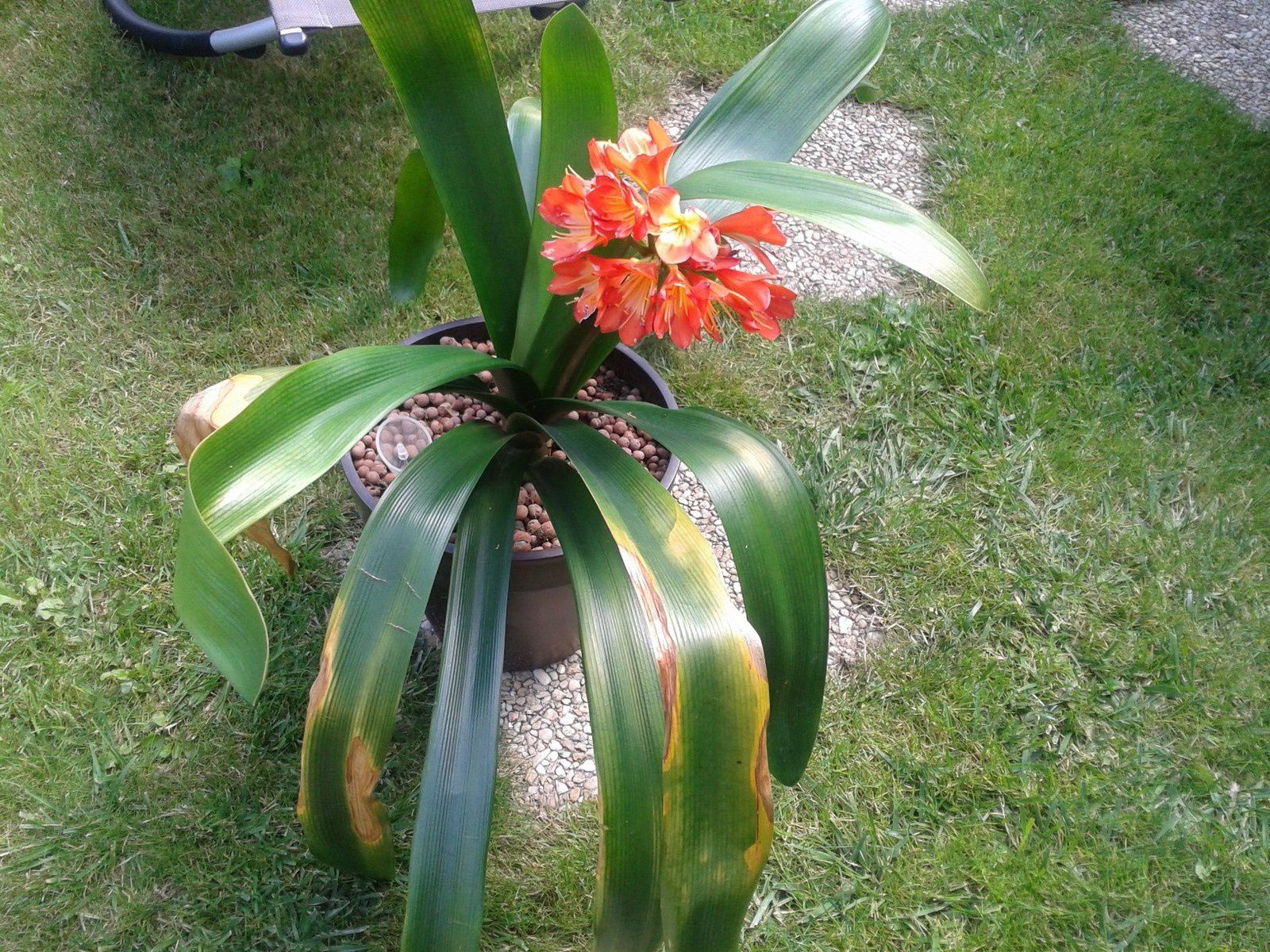 Plante , reçu en cadeau.. Le pot est un précédent  cadeau malheureusment la plante n'avait pas survécue