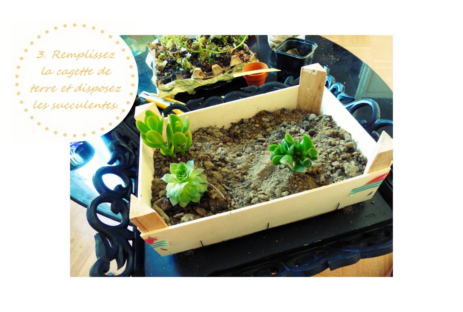 DIY un petit jardin pour mes succulentes.