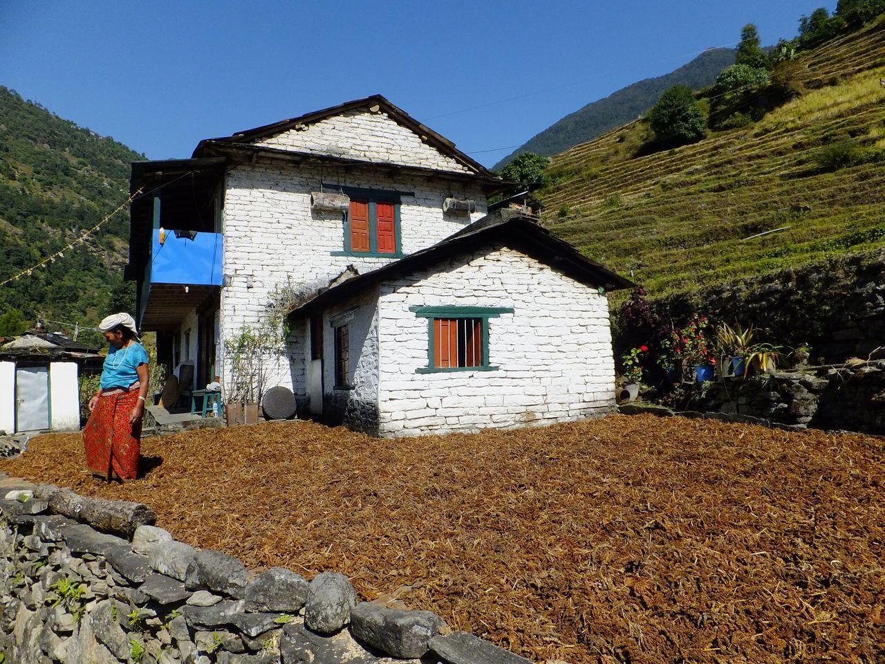 Scènes de la vie rurale