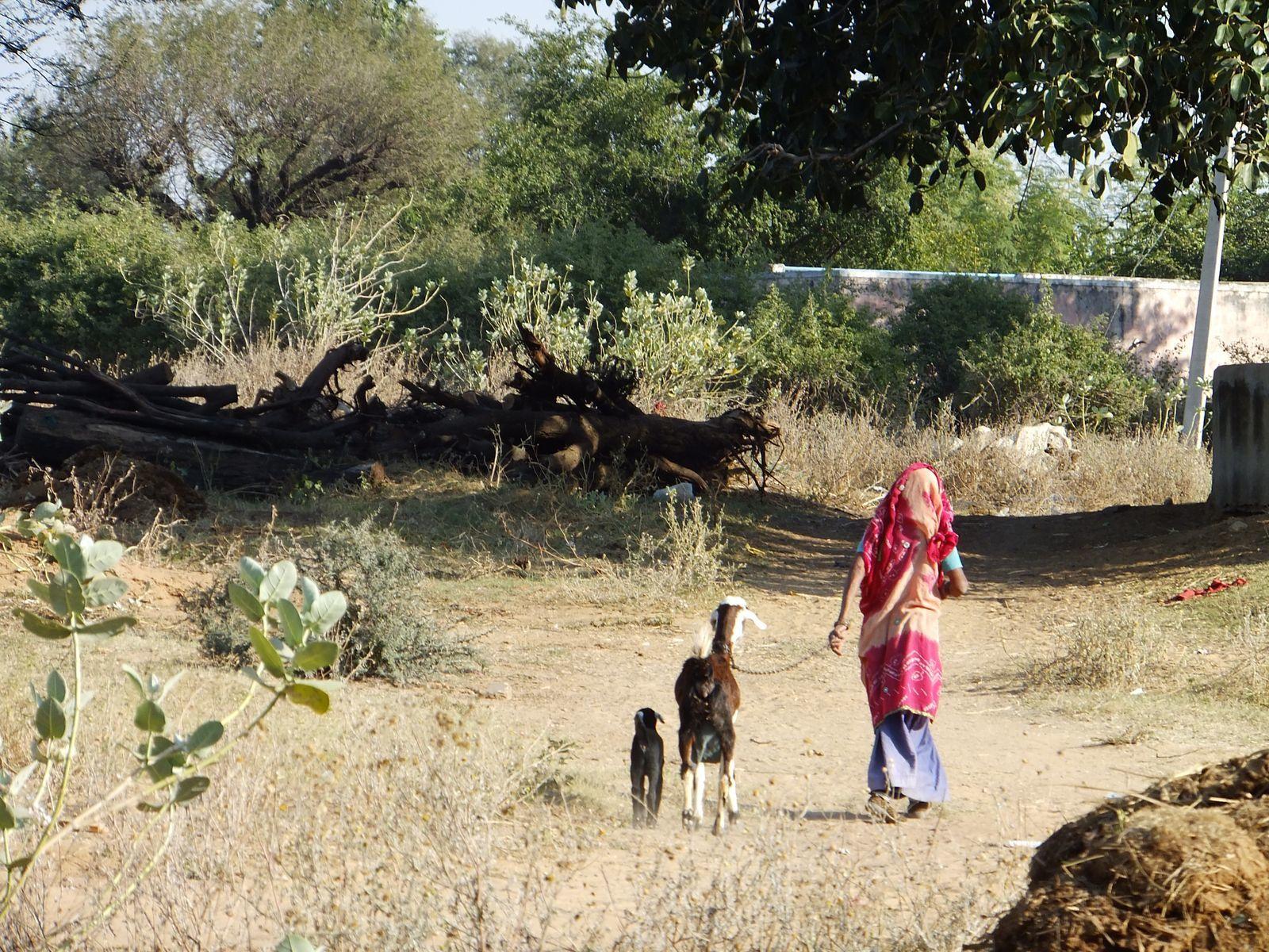 Vivre l'Inde rurale traditionnelle à Apani Dhani !