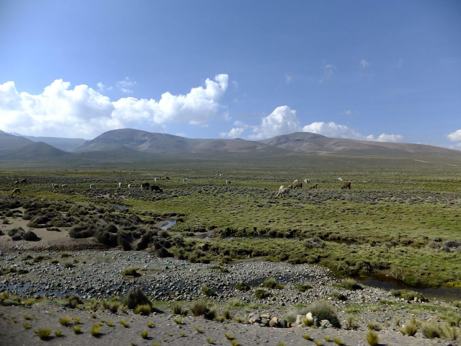 La vallée de Colca : la splendeur des paysages péruviens !