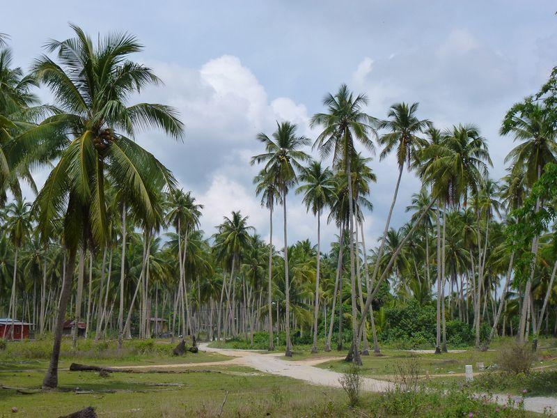 La Malaisie traditionnelle dans la région de Kota Bharu