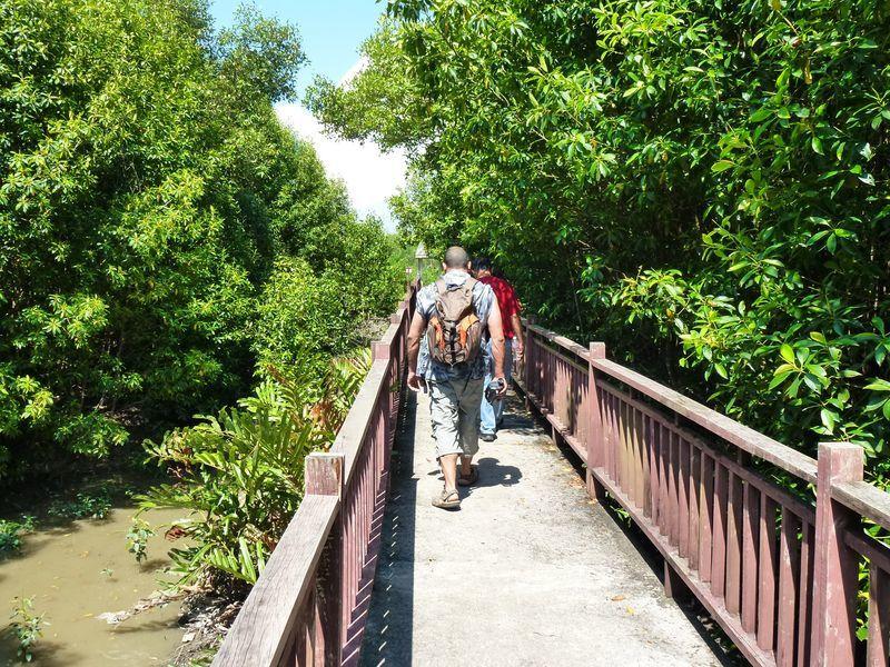 Kuala Selangor : excursion nature en Malaisie