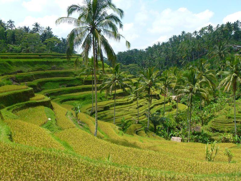 Trek de Pakudui à Tegallalang