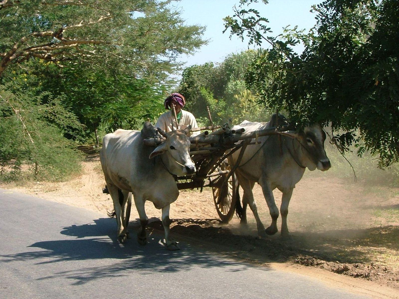 La Birmanie, entre beauté lacustre et charme bucolique