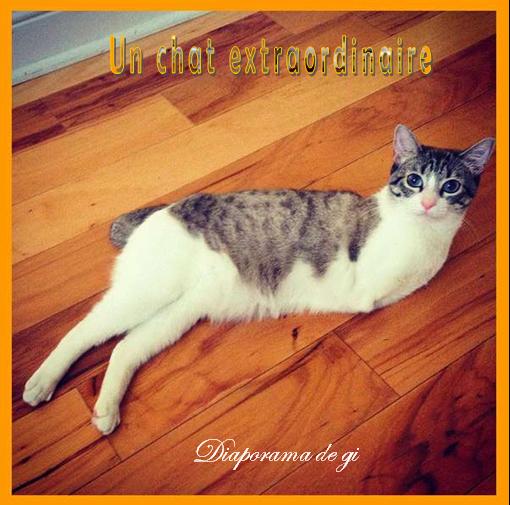 Un chat extraordinaire