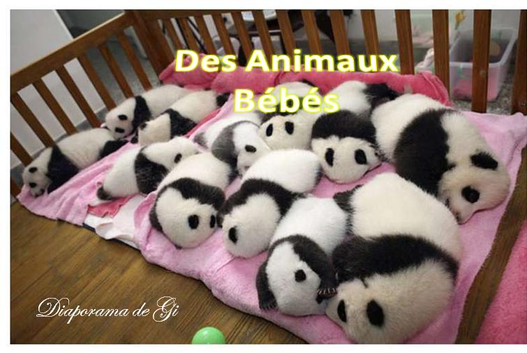 Des animaux bébés