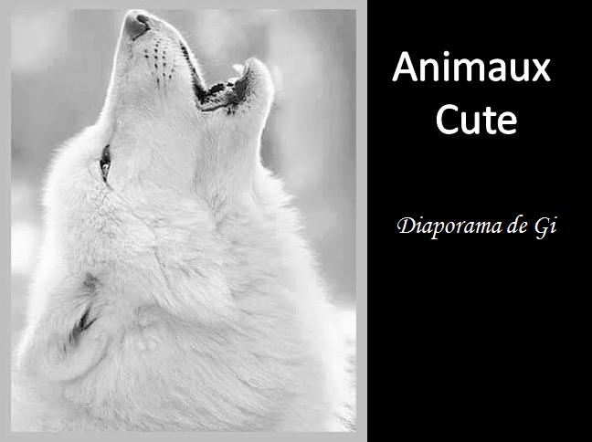 Des animaux Cute