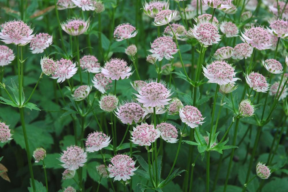 Source: www.desirableplants.com