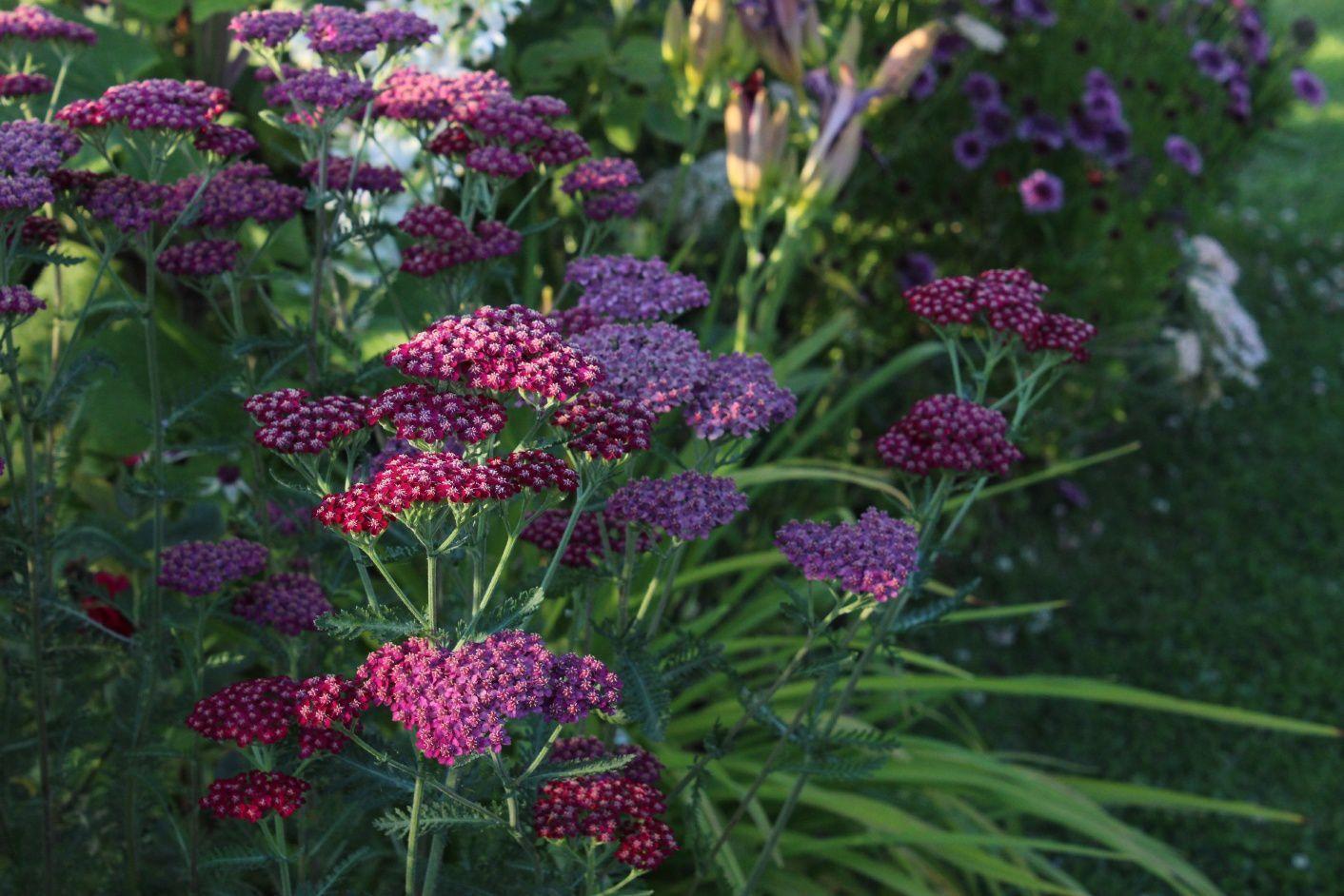 Les floraisons de juillet