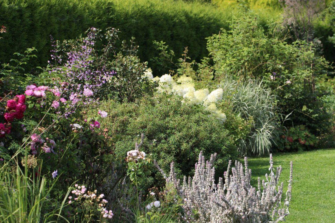 Canicule, le jardin a très bien résisté.