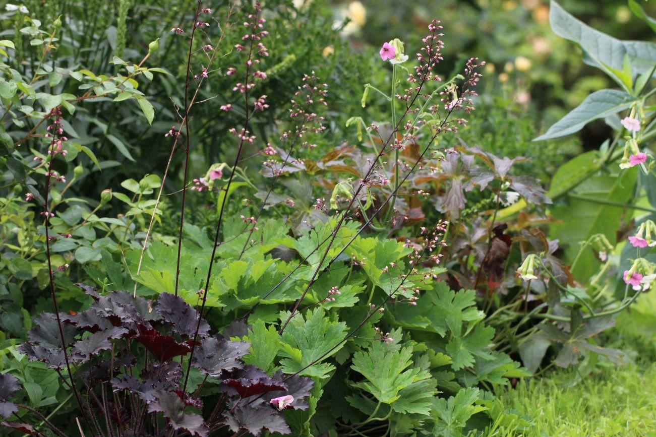 le jardin à la mi-août (2)