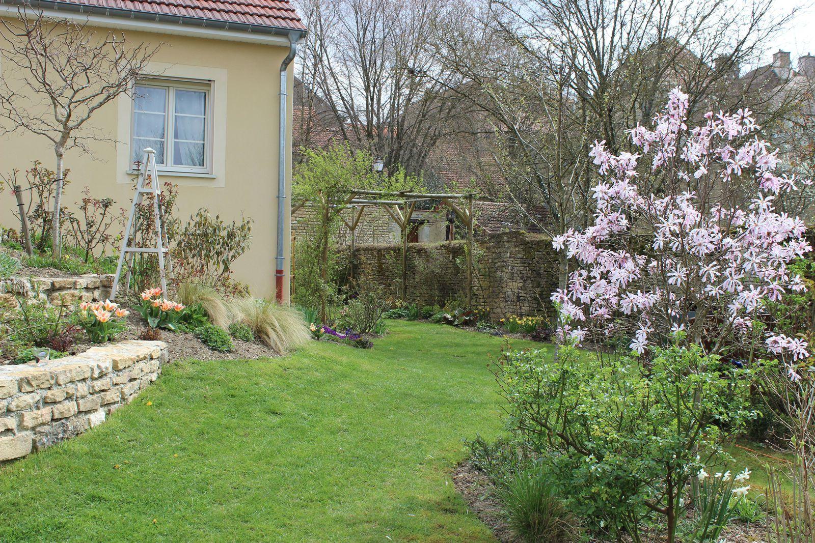 Le magnifique magnolia stellata rose. Je le préfère nettement à la version blanche.