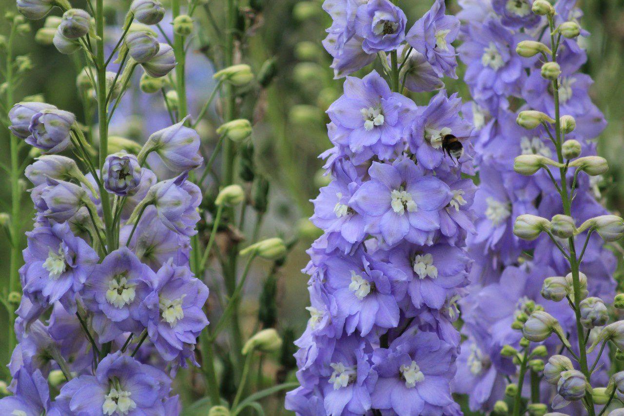 Fête des plantes de Beervelde: mes trouvailles