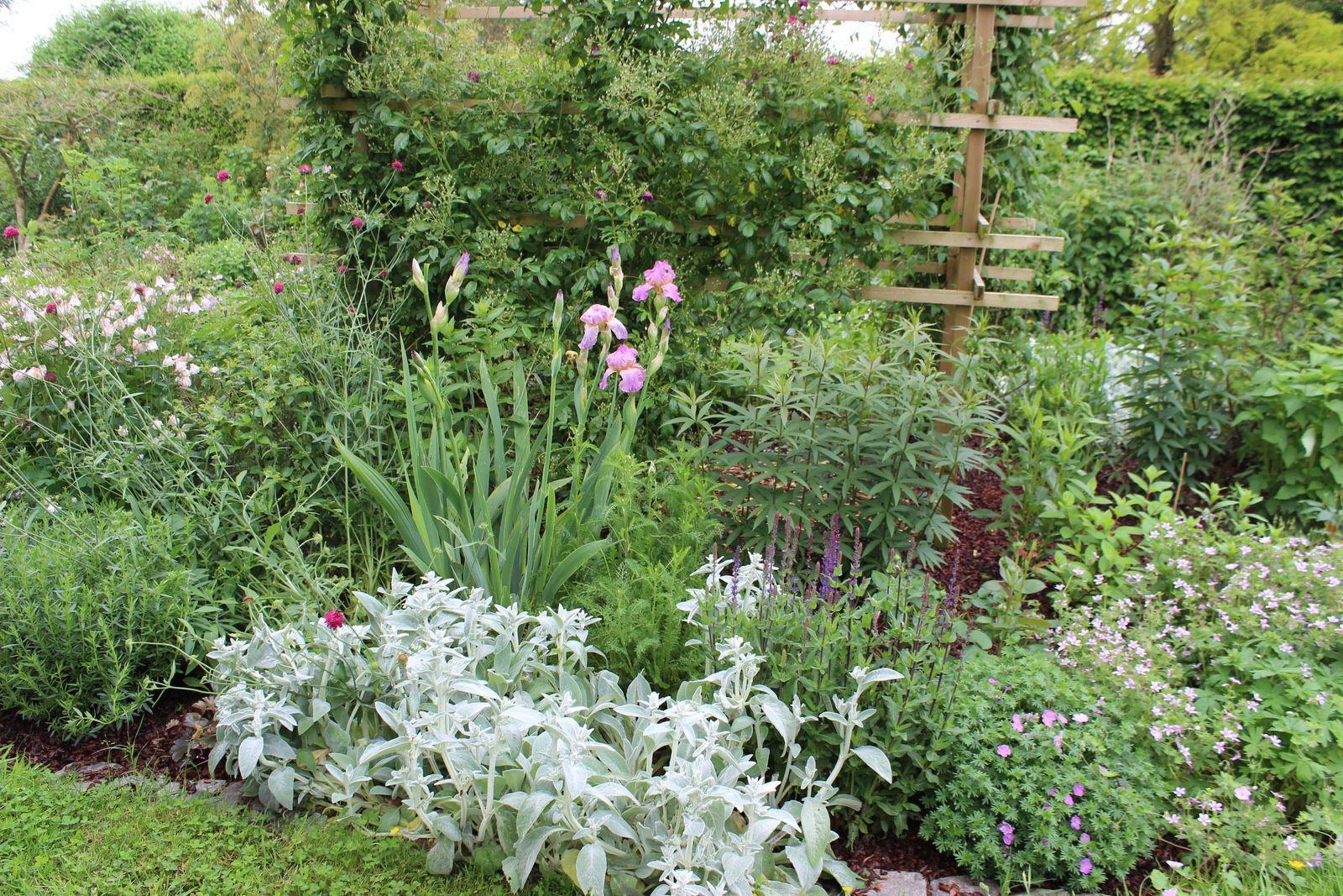 A droite: le magnifique géranium aspheloides.