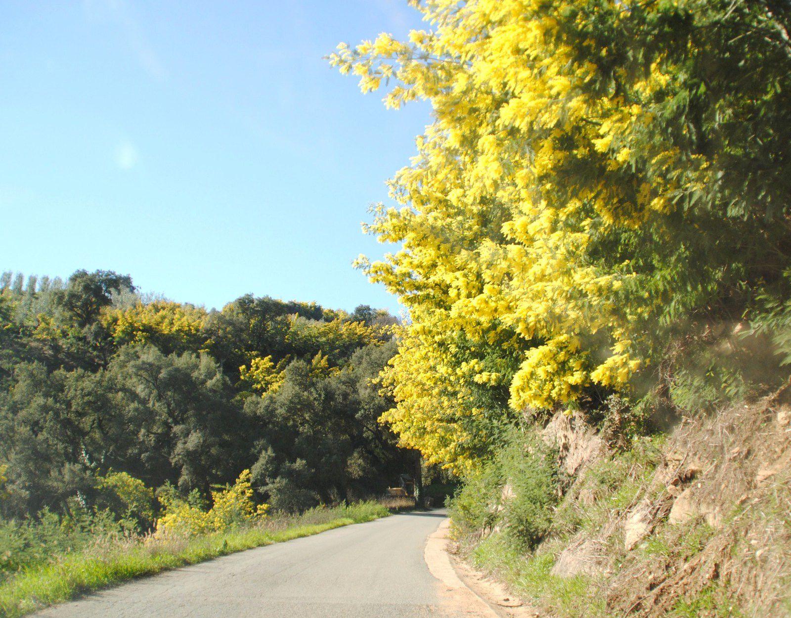 Magnifique balade ,du mimosa à perte de vue .Merci de votre visite ! à bientôt pour une prochaine balade d'ici et d'ailleurs .