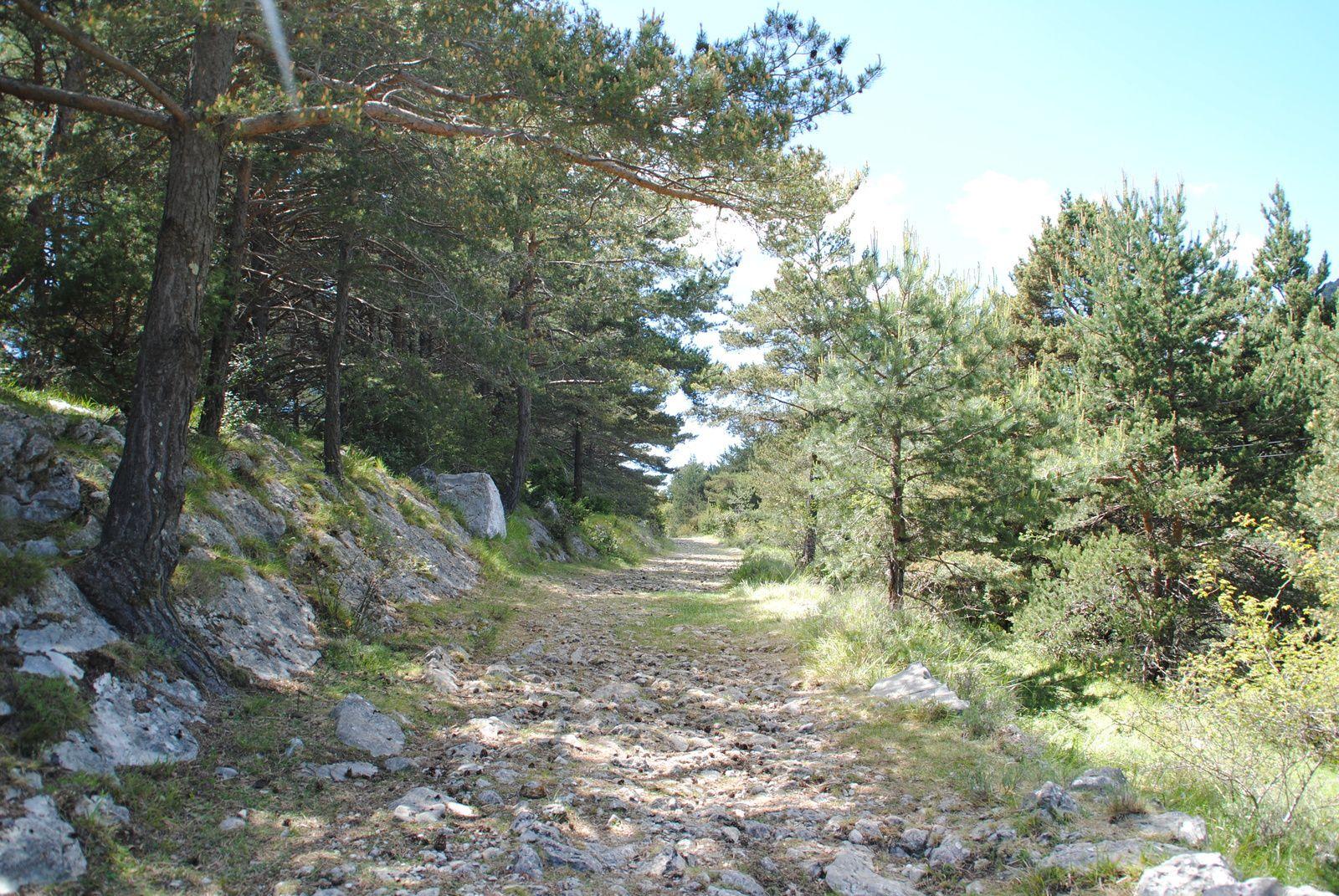 Escragnolles ,le chemin de la chapelle st Martin ! balades d'ici et d'ailleurs .