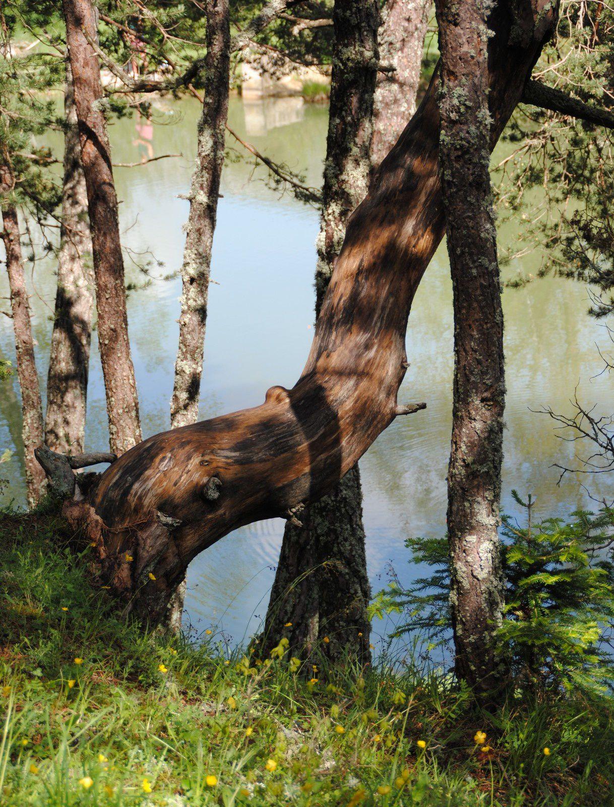 Le lac de Thorenc balades d'ici et d'ailleurs
