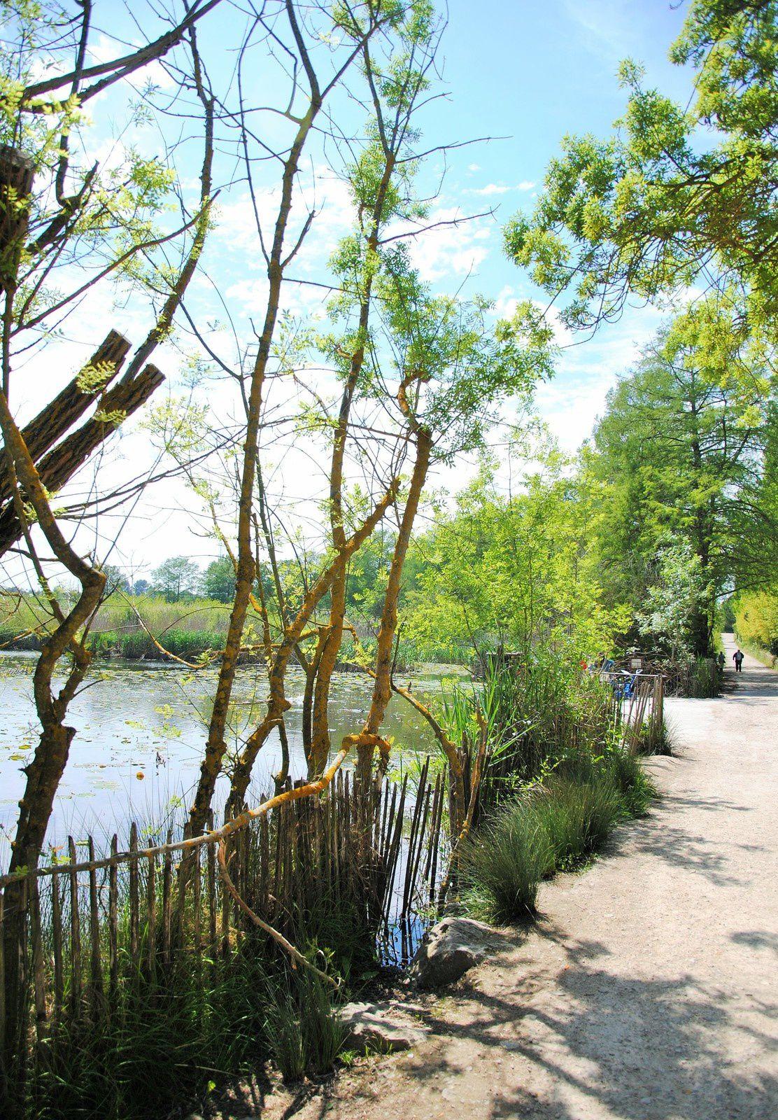 L'étang de FontMerle ( Mougins  AM ) balades d'ici et d'ailleurs