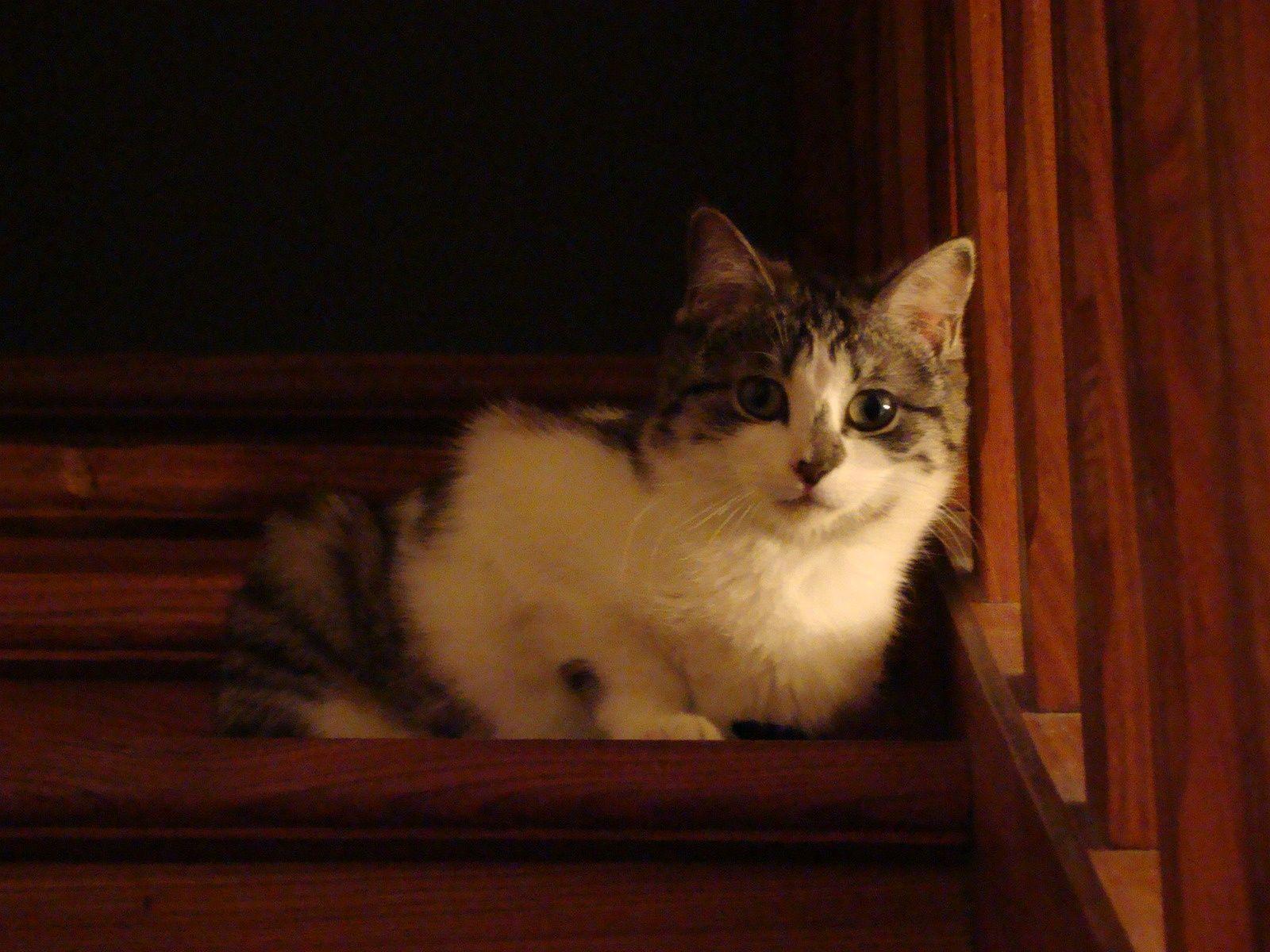 Pour continuer parler chat notre copine calinette a for Adaptation chat nouvelle maison