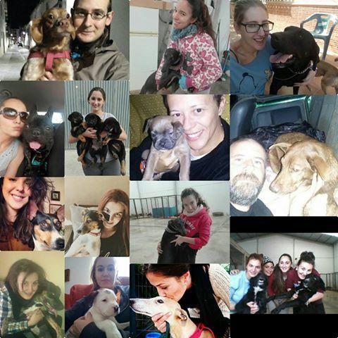 Les bénévoles de l'Association de Protection Animale Cambiando Miradas à Ecija